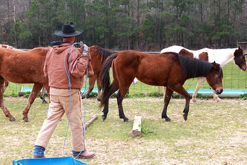 man roping horse