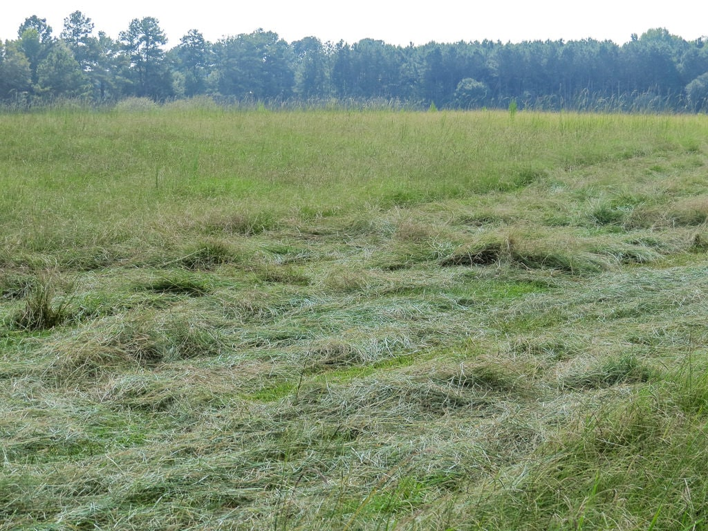 Hay that has been cut