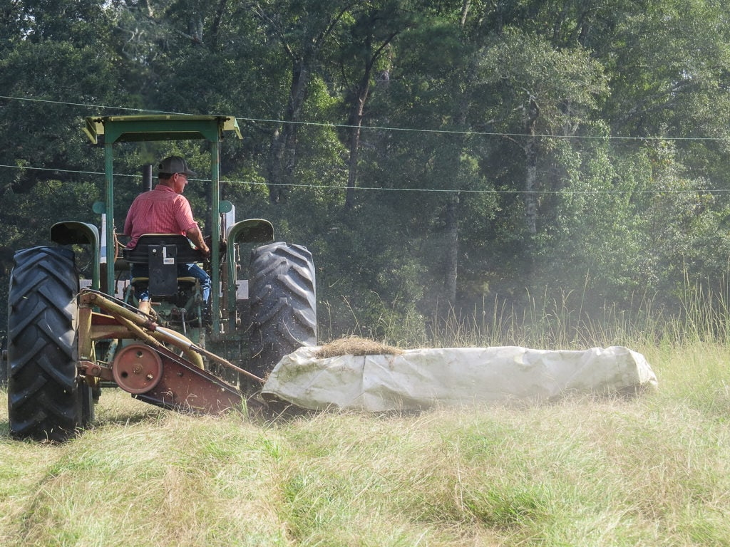 Hay being cut for baling