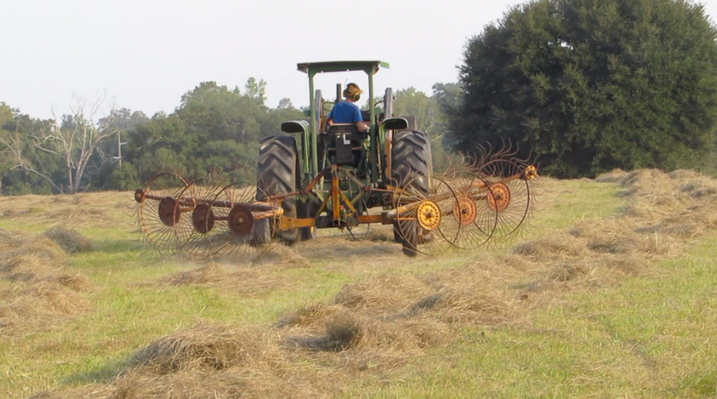 Raking the hay to bale