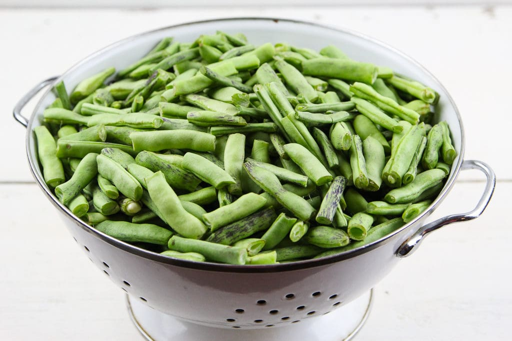 Showing what green beans ready to can look like.
