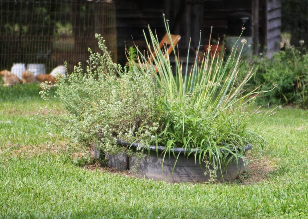 old raised bed herb garden made in cattle feed container