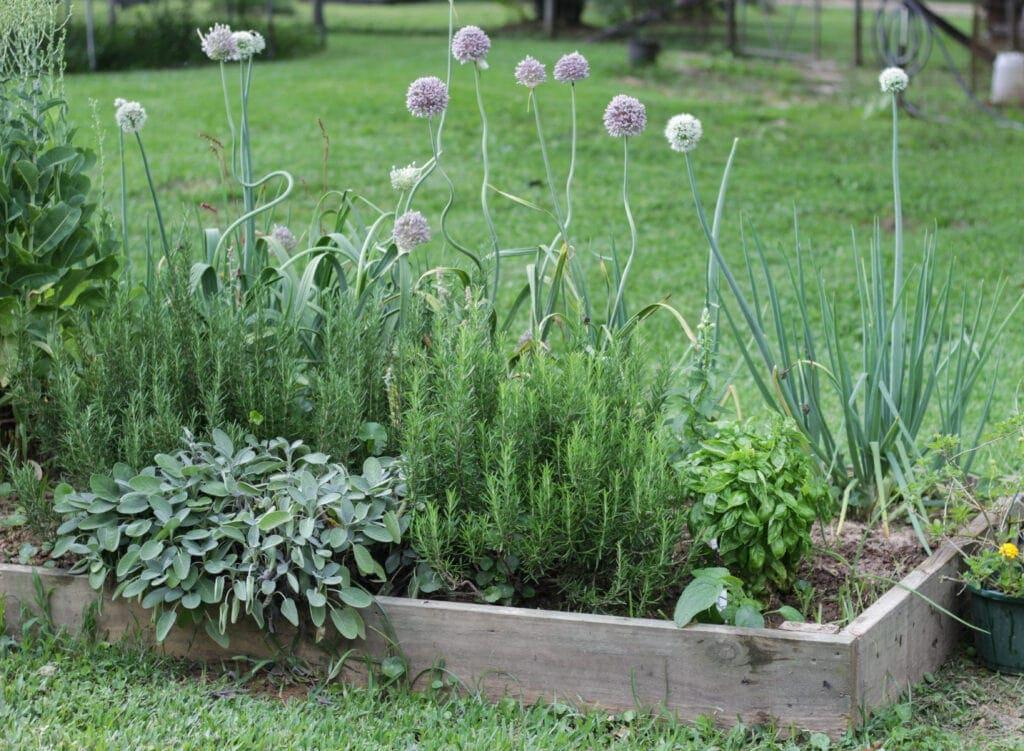 a raised bed herb garden